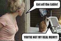 Stuff that makes me laugh / Random funnies / by Lene Hansen