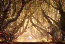 I <3 trees / by Lene Hansen