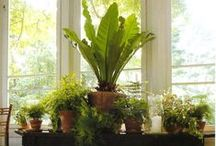 Must Have More House Plants / Greenery for your home decor!