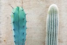 cacti / spikes. softness. tall things.  / by Jenny Lynn Wood