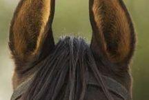 Horses