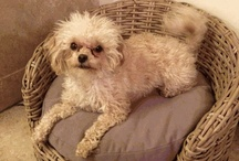 Wicker Dog Beds / Pamper your Dog in Style with a nice wicker dog bed.