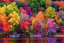 Colors / by Kathie Condon