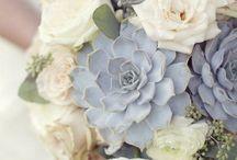 flowers & succulents / by Amanda Boyden