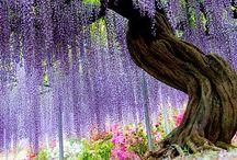 Garden of Eden. Nature / Nature. Photography