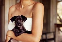 Brides with Animals / by Nicole Sjogren
