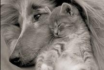 { adorable critters } / ...awwwwwwwww