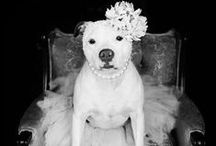 Must Love Dogs / I have a weakness for dogs, especially pit bulls!  / by Casey Parker