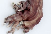 Claire Lindner / Work of ceramic artist Claire Lindner