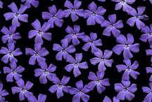 Azul-Violeta