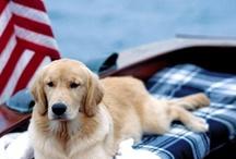 Adorable Pups / by Jennifer Bridges