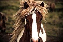 Horses / by Annemarie Dillard Jazic