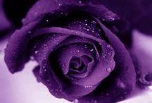 blue & purple / by Sabrina K.