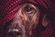 Pet Photography / by Jennifer Barone