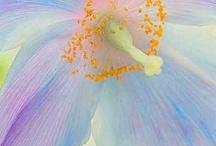 flower / by Rose Clarke