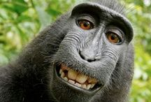 Leggerezza - Humor / Dalle barzellette ... a splendidi sorrisi. #barzellette #sorrisi #smiles #Humor
