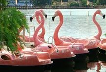 Summer Lovin / Summer, beach, sunshine, flamingos, pineapples & heart sunnies