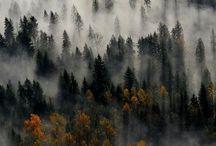 Autumn / by Nicole Mehl