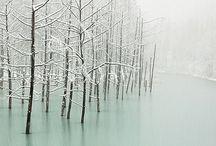 Winter / by Nicole Mehl