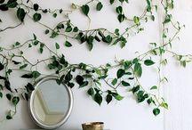 Indoor Plants / by Nicole Mehl