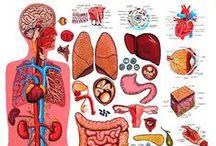 Menselijk lichaam / Van alles leerzaams over het menselijk lichaam