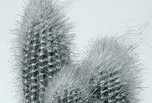Plantae / by Line Hansen