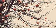 Autumn/Harvest inspiration