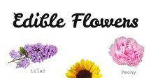 Bursting with Flavor / flower power foods