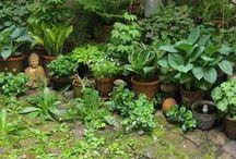 Garten. / Garteniden, Pflanzideen, Wege und Sitzplätze. (Gardening)