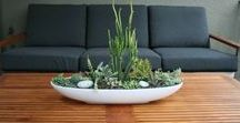 Decorating with Succulents / Decorating ideas with succulents for your home decor with Debbie Correale of Redesign Right, LLC.