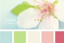 Color Combinations / by Kelley Branstetter
