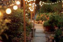 Garden / by Will Bussard