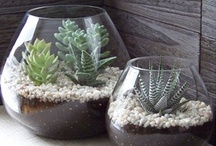 Gardening - indoors