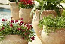 Garden ~ Container