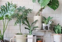 House Plants / by Katrina Massey Photography