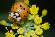 Luck of the lady bug