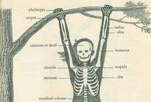 Bodywork ~ Anatomy