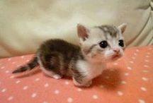 Cuddly cuties