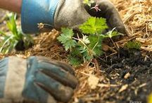 Landscape and Garden Tips / Bring your gardening and landscaping to the next level with these helpful guides, tips and tricks!