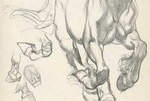 Sketchy / Drawing & Animation