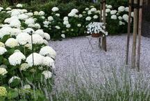 white garden  / by Carlos Aime