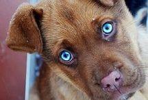 Nos chiens préférés - Our favorite dog pictures