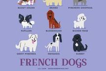 Infographie animaux - Pets Infography