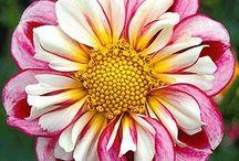 Flowers (Sandra) / Flowers I like from our beautiful world!