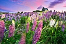 New Zealand / The best places to visit in New Zealand...other than ski areas of course!