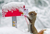 Snow Bunnies (and other animals) / Just cute pictures of wee furry things in the snow.