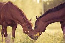 HORSES! / by María Jesús Montero
