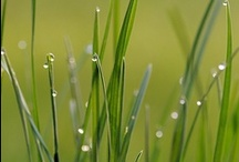 Joys of Living - Admire Nature