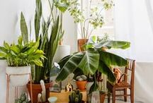 green / plant