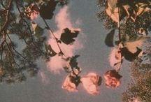 { flowers & florals }